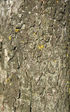 Dry tree bark  texture background. Backgrounds And Textures, Rustic Background, Wood Texture Background Stock Photography
