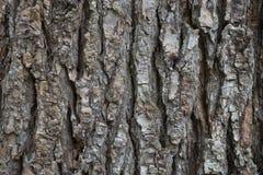 Dry tree bark texture background Royalty Free Stock Image