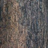 Dry tree bark texture background Stock Image