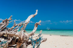 Dry tree on the beach with crystal clear water Stock Photography