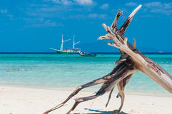 Dry tree on the beach with crystal clear water Royalty Free Stock Photography