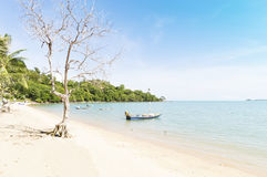 Dry tree on the beach Royalty Free Stock Image