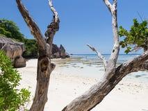Dry tree on a beautiful beach Royalty Free Stock Photo