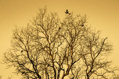 Dry tree with birds flying Stock Images