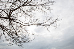 Dry tree branch against cloudy day use as multipurpose natural b Royalty Free Stock Image