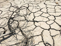 Dry tree branch on dry and cracked ground effect from global war Royalty Free Stock Photos