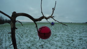 Dry tree branch on field with Christmas bauble toy, time lapse 4K. Dry tree branch on farmland field with two Christmas bauble toy and wind, time lapse 4K stock video