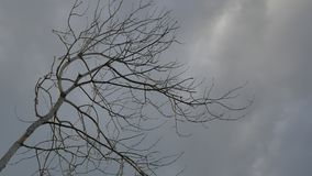Dry tree branch on a grey sky background nature stock footage