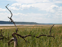 Dry tree branch2 Stock Image