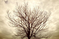 Dry tree branch with rainy cloudy day Stock Images
