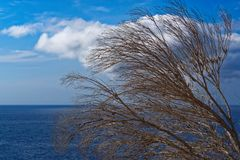 Dry tree branches against blue sky and water of Atlantic ocean. Madeira island, Portugal stock image