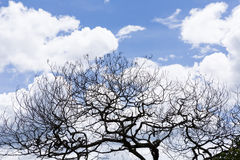 Dry tree branches blue sky background Royalty Free Stock Photography