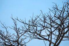 The dry tree branches with blue sky royalty free stock photos