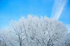 Dry tree branches covered with snow against the sky royalty free stock images