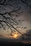 Dry tree branches in the morning Royalty Free Stock Photography