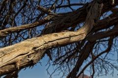 Dry tree branches in the Namibia desert. Sossusvlei. Africa stock image