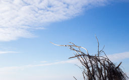 Dry tree branches trying reach for blue sky and sun Royalty Free Stock Photography