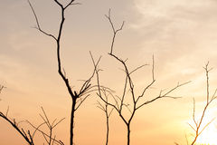 Dry tree branches Stock Image