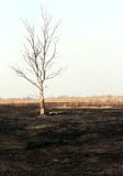 Dry tree in burnt steppe Stock Photos