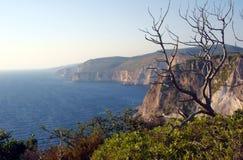 Dry tree on cliff Stock Photos