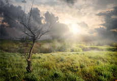 Dry tree and clouds Royalty Free Stock Image