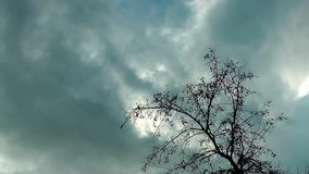 Dry Tree and Clouds Time Lapse. Video stock footage
