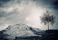Dry tree. Conceptual image of dry tree standing on ruins Royalty Free Stock Photos