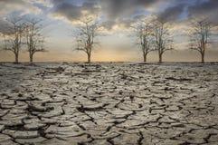Dry tree. Stock Photo