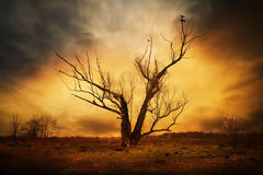 Dry tree and crows on the branches Stock Photos