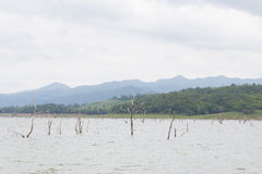 Dry tree dead in dam Stock Photos