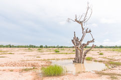 Dry tree death. Lonely dry tree against blue sky Royalty Free Stock Photography