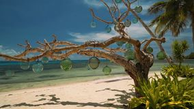 Dry tree decorated with glass bulbs on white sand beach, Philippines stock video footage