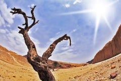 Dry tree in desert Stock Image
