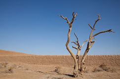 Dry Tree in the Desert Against Blue Sky Royalty Free Stock Photo