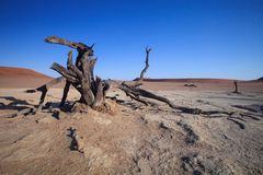 Dry tree in the desert Namibia Stock Photos