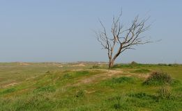 Dry tree at the edge of grassy hill in spring Royalty Free Stock Photo