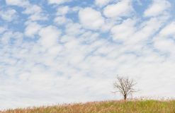 The dry tree on the field and beautiful sky Royalty Free Stock Image