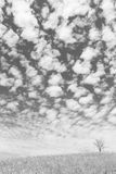 The dry tree on the field and beautiful sky on black and white backg Royalty Free Stock Photo