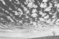 The dry tree on the field and beautiful sky on black and white background Stock Photos