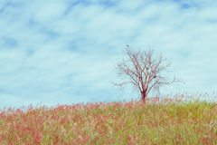 The dry tree on the field and sky, vintage toning Stock Images
