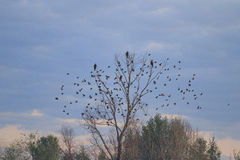 Dry tree and flock of birds Royalty Free Stock Photography
