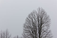 Dry tree in fog Royalty Free Stock Images