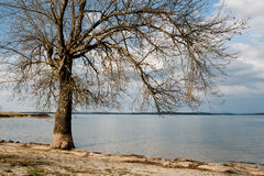 Dry tree at the foot of a lake Stock Photography