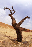 Dry tree of the freakish form Stock Photos