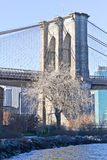 Dry tree in front of Brooklyn Bridge at New York Royalty Free Stock Images
