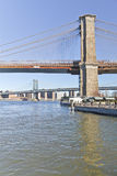 Dry tree in front of Brooklyn Bridge at New York Stock Images