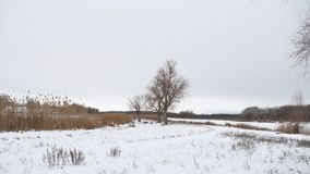 Dry tree and grass reeds on the river in winter snow landscape. Dry tree and grass reeds on river in winter snow landscape Stock Photo