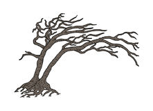 Dry tree illustration Stock Images