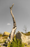 Dry tree image Stock Photo