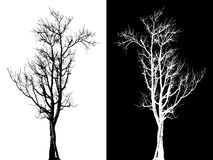 Dry tree isolated vector. On white Stock Photos